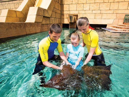 aquaventure-rayfeeding-1562159636807