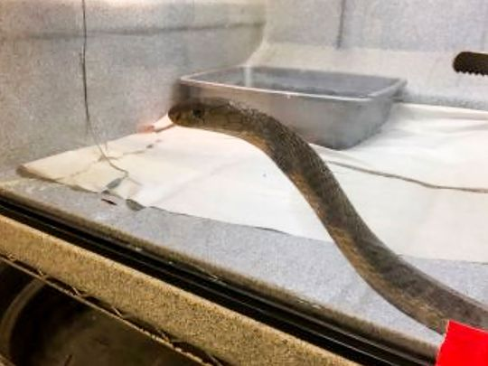 NY-REPTILES-SEIZURE-1-(Read-Only)