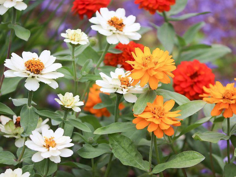 flowers-4269854_1920