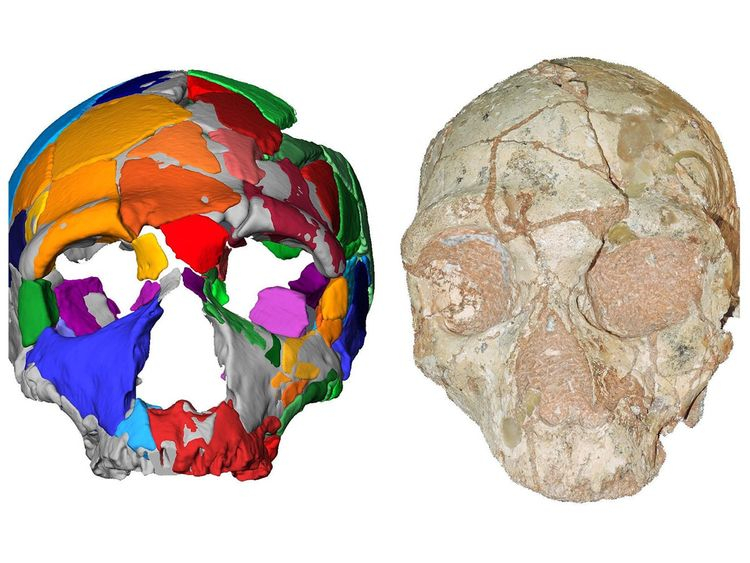A skull named Apidima 2
