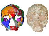 A skull named Apidima 2