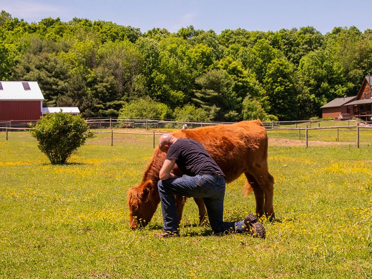THERAPY-COWS-5-(Read-Only)