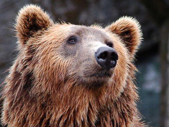 190716 bear