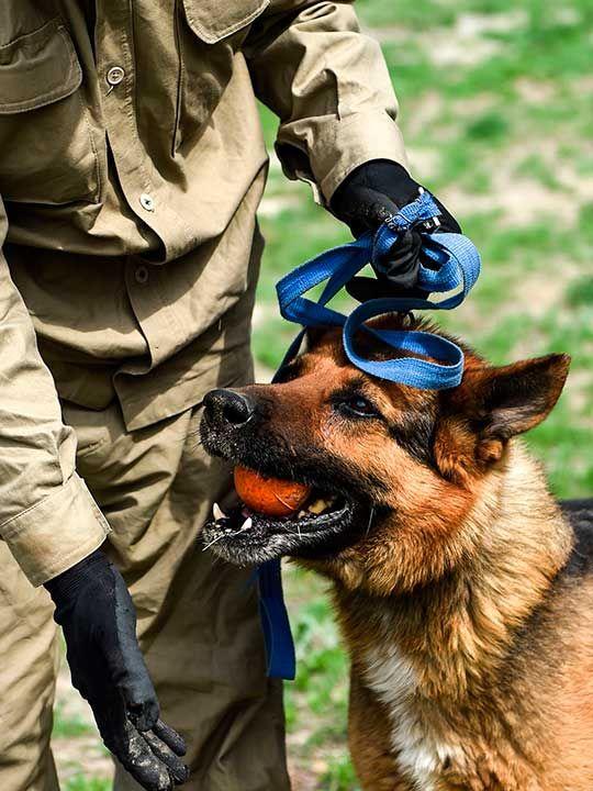 190716 dog handler