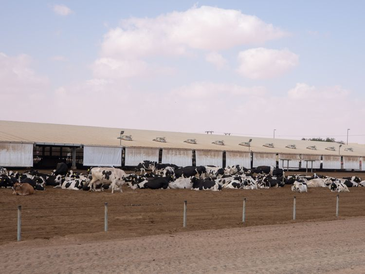 NAT 190707 Al_Ain_Dairy15-1563353918972