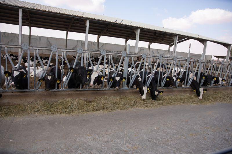 NAT 190707 Al_Ain_Dairy155-1563353924312