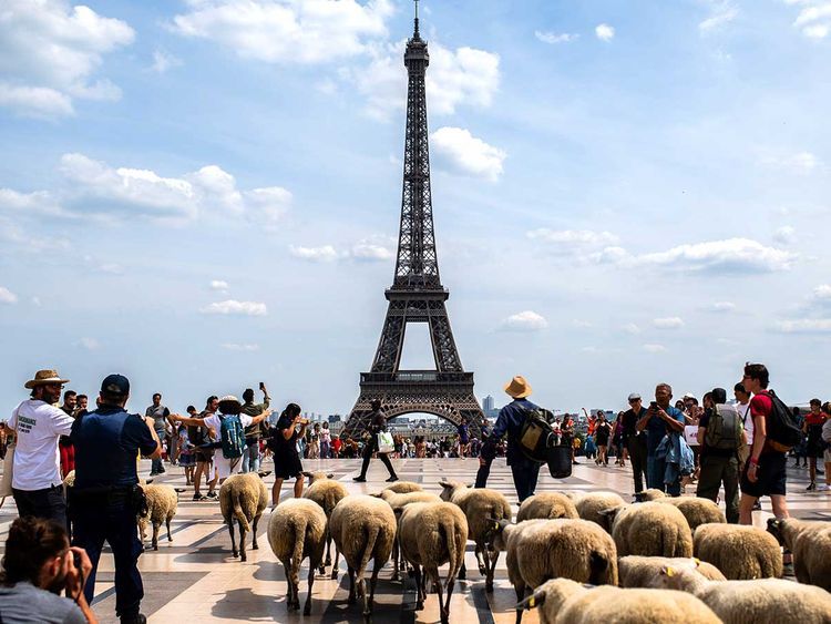 190718 sheep paris