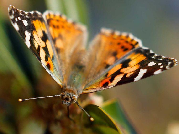 190719 butterfly