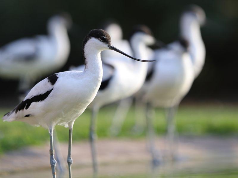 NAT 190720 Wasit Nature Reserve 2-1563630587438