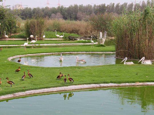 Sharjah nature reserve on Ramsar list