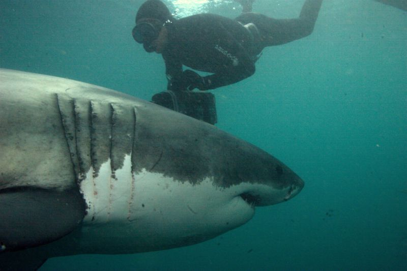Atlantis Shark Week-1564233781480