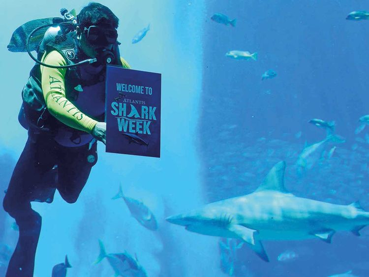 Diver hold the Shark Week sign at The Lost Chambers Aquarium