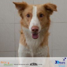 RDS_190729 Save an animal - Novo-1564319589607