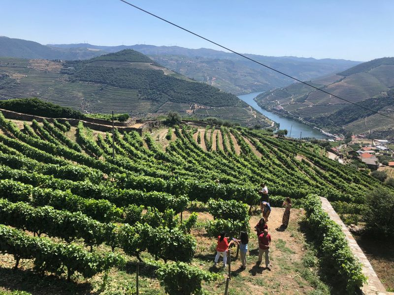 View of the Douro Valley from the D'Origem Olive Oil Museum-1564404856800
