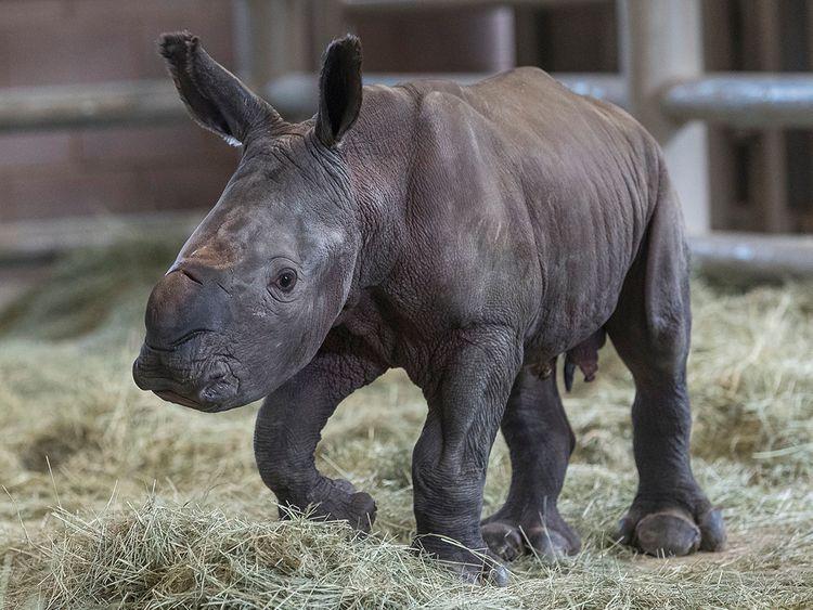 190731 Rhino
