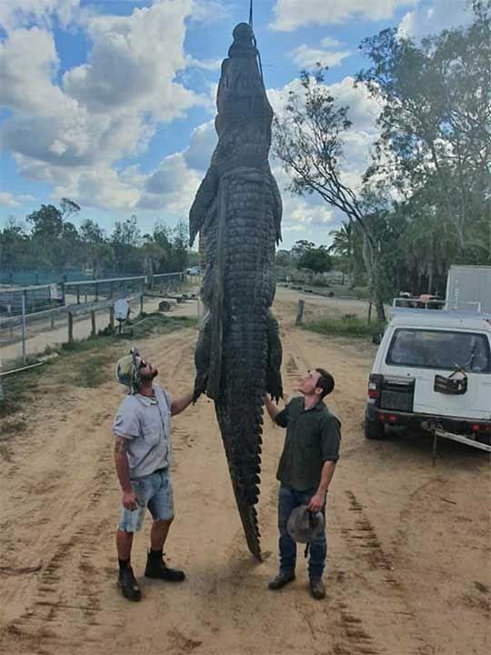 190801 australian croc
