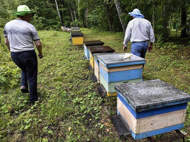 190801 beekeepers