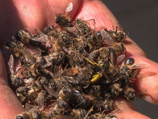190801 buzz kill