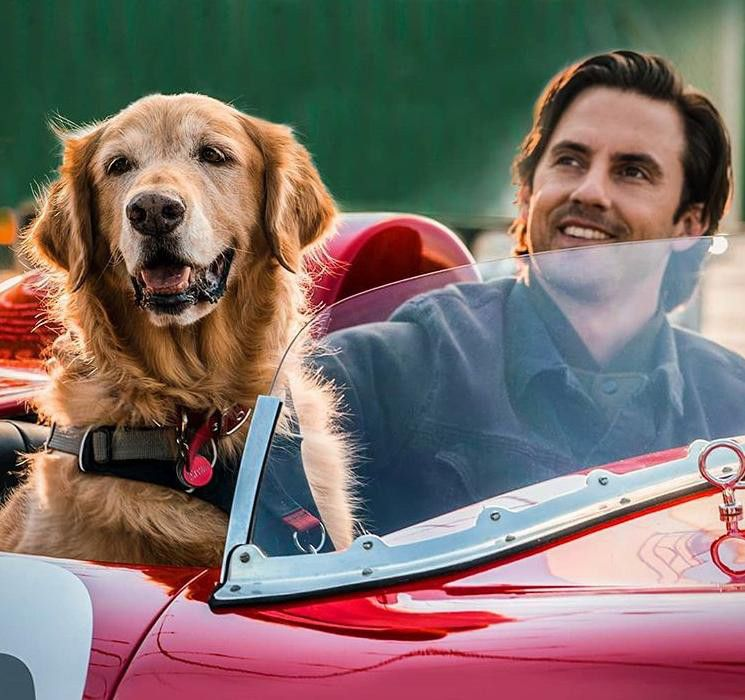 Milo Ventimiglia in The Art of Racing in the Rain-1564813101620