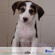 RDS_190805 Save an animal - Biden-1564933304529