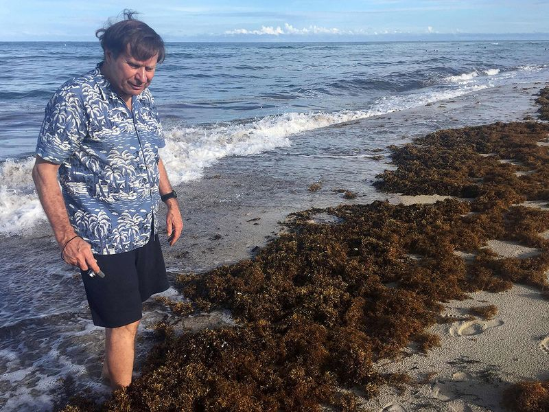 Mexico to Florida beaches drenched in seaweed