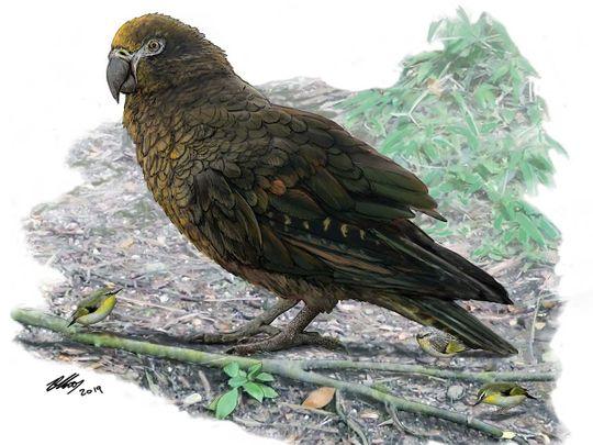 190807 giant parrot