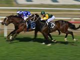 $20 million Saudi Cup a big boost for international horse racing