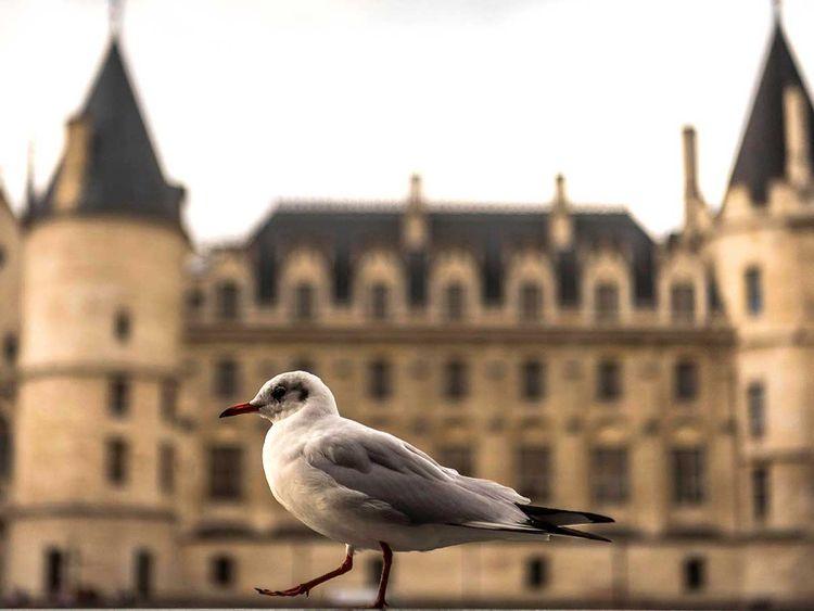 190808 seagull