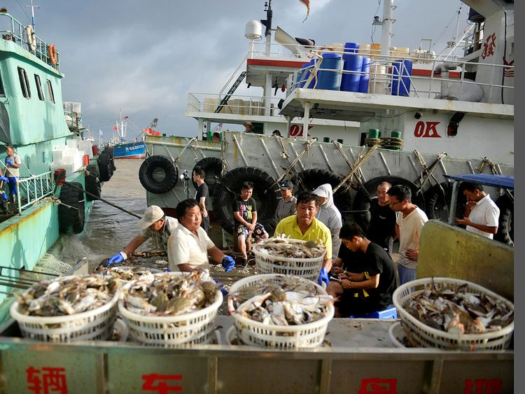 Workers unload seafood -092