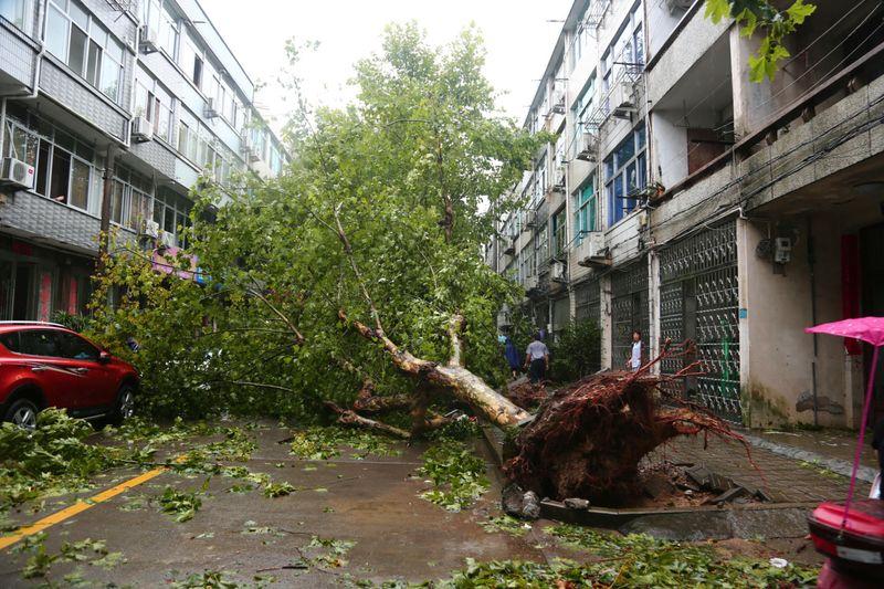 WLD Typhoon 2-1565508181394