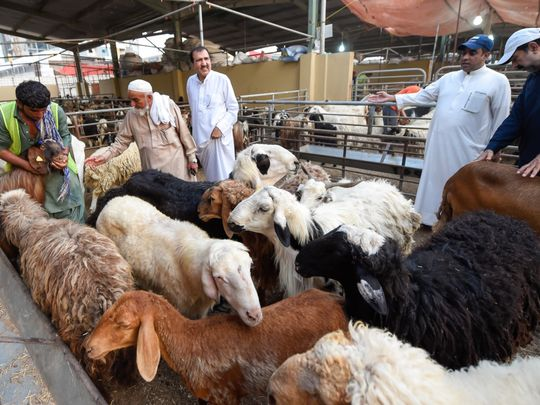 Off the cuff: Techie makes online sheep market for Eid