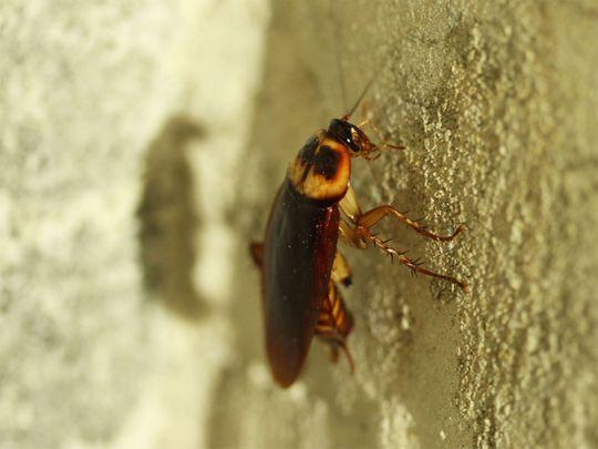 Poor hygiene to blame for return of pests