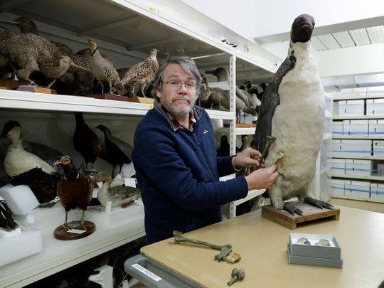 New_Zealand_Extinct_Monster_Penguin_66404