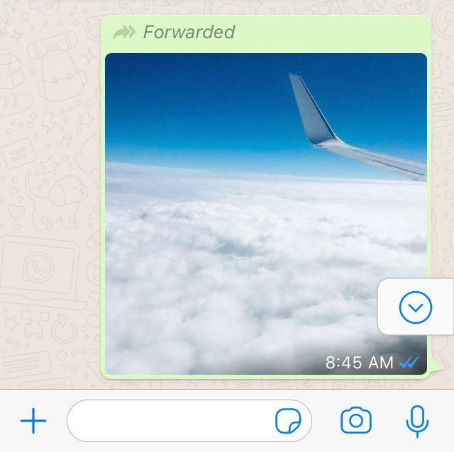 WhatsApp Forwarding Info