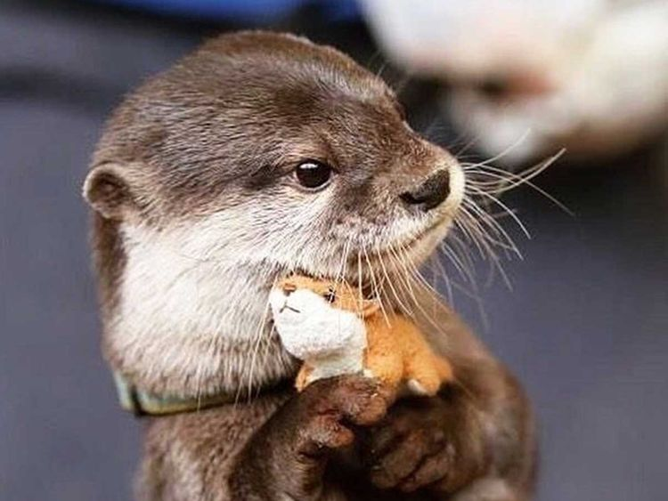 190823 otterly dangerous