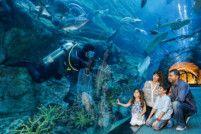 Dubai Aquarium & Underwater Zoo WWWW-1566656535698
