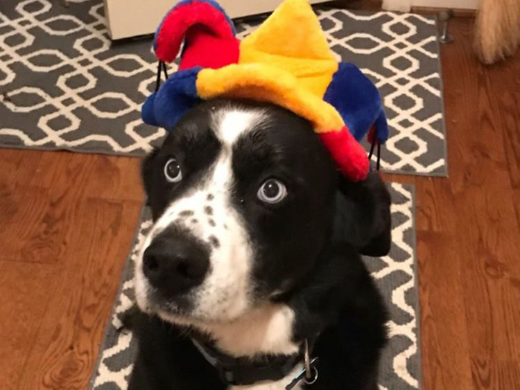 Doggie in a hat
