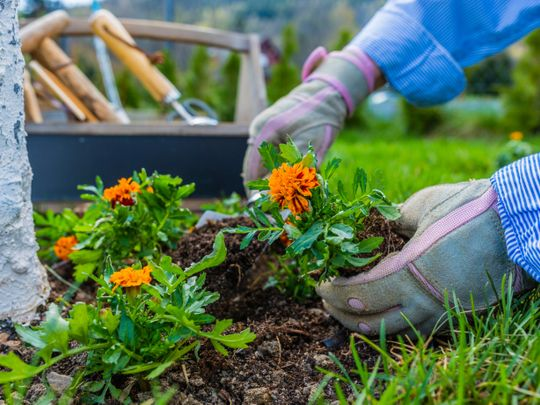 Off the Cuff: Gardeners learn to see time differently