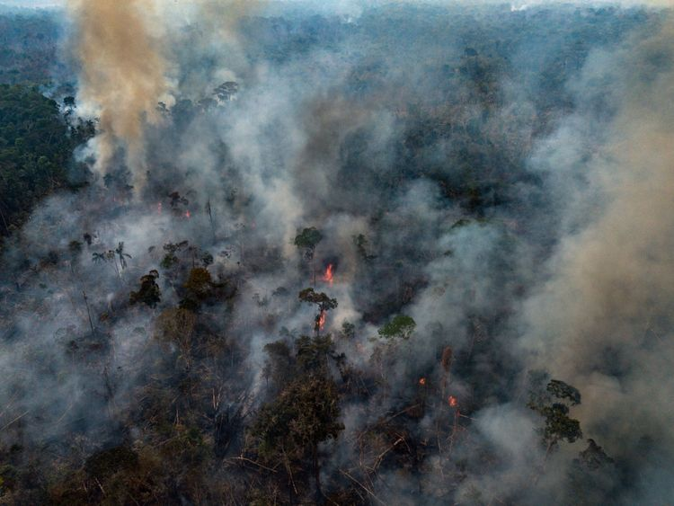 The Amazon Forest Was On Fire And Help Came Late And Other