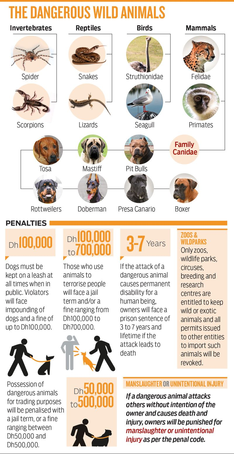 190909 banned animals