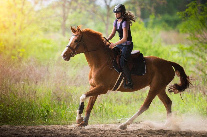 OPN 190912 HORSE-1568285723650