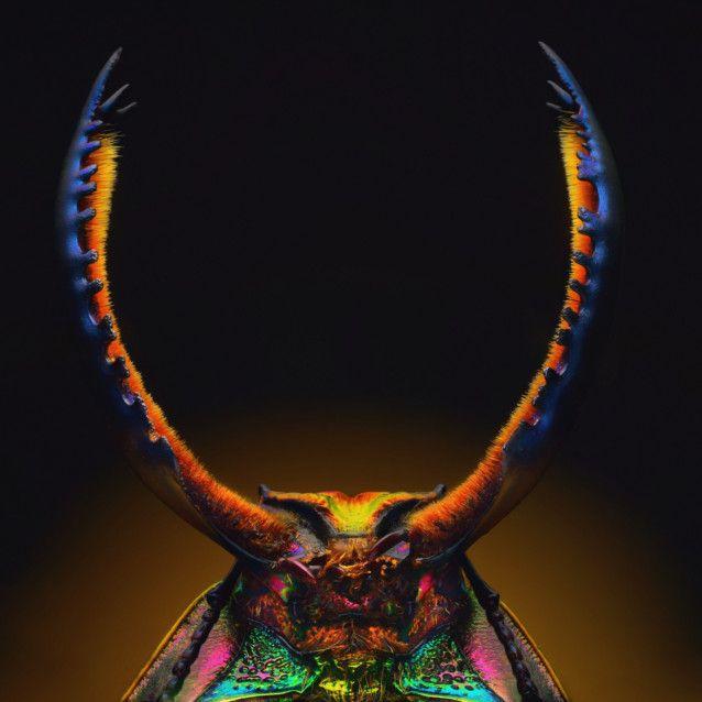 MacroLamprima adoiphinae - Stag beetle-1568556056141