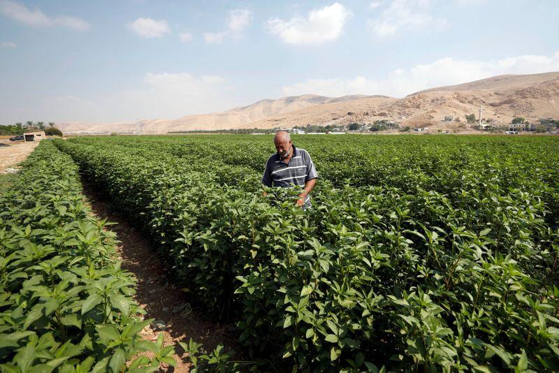 Jordan Valley Breadbasket-1568794983624