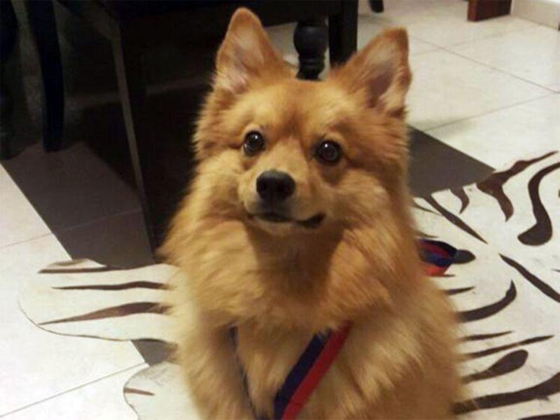 RDS_190923-CR-Pet-dog-saves-human-1-1568816343419