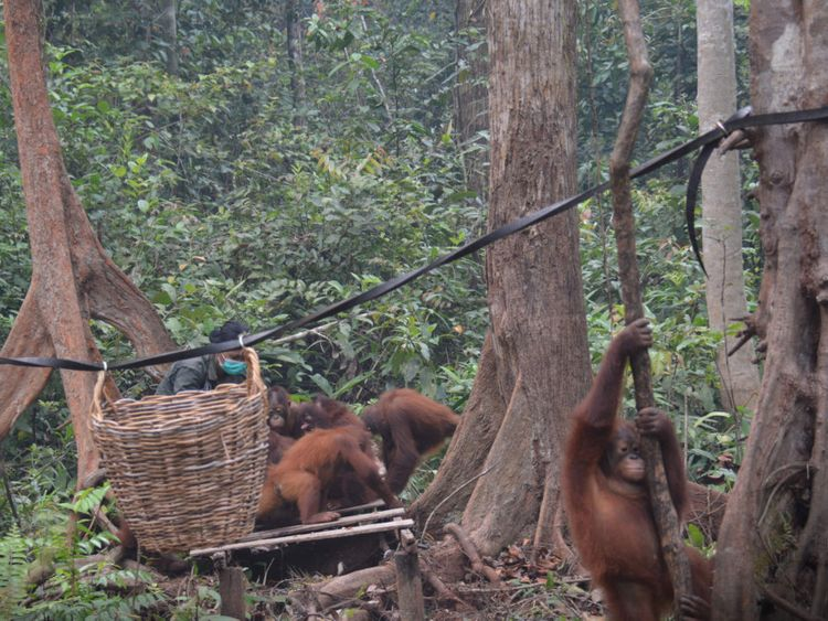 WLD 190925 Orangutan33-1569591095342