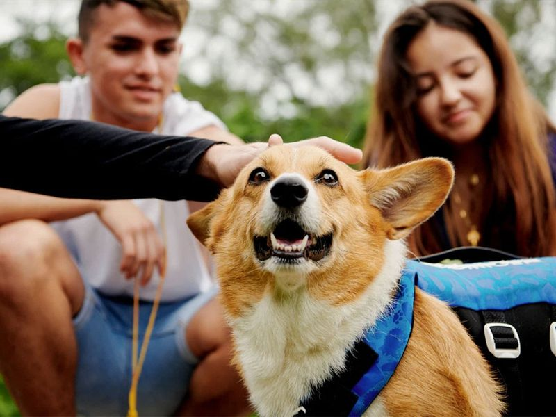 Paddleboard with corgis in the US