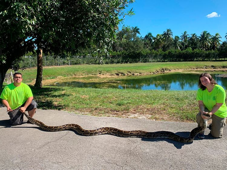 World's biggest python
