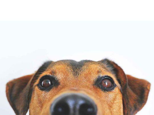 dog generic