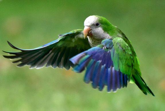 OPN A parakeet-1570614185785