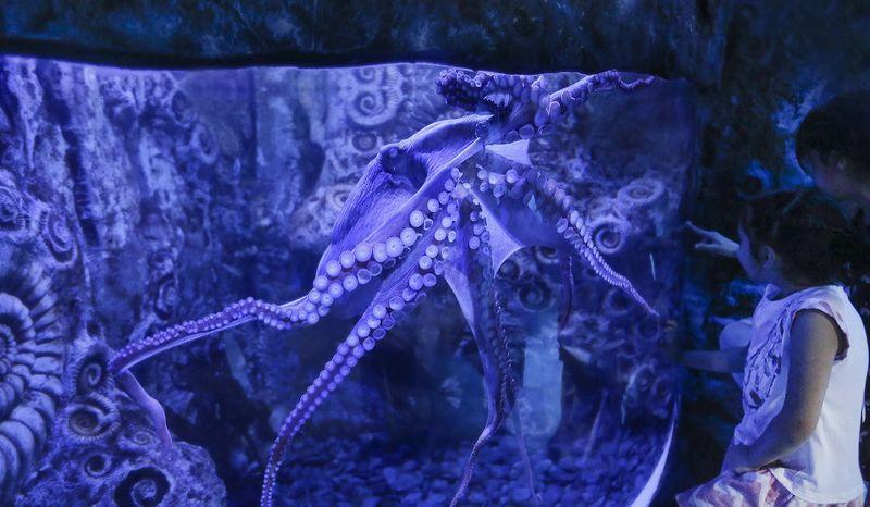 Octopus www-1570801840649